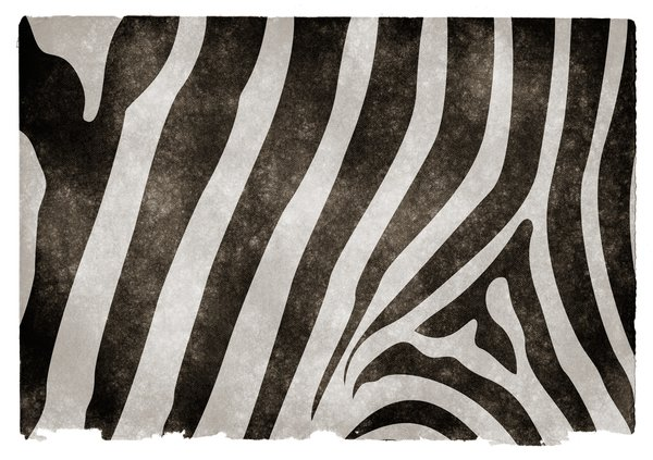 Zebra Stripes Grunge Paper: Grunge textured zebra stripes on vintage paper.