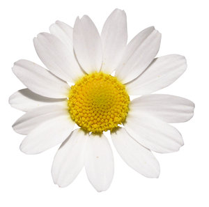 Free stock photos rgbstock free stock images 89 0 grade accountcircle white flower mightylinksfo