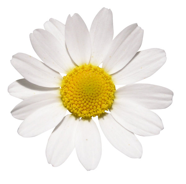 White flower: Just a nice flower