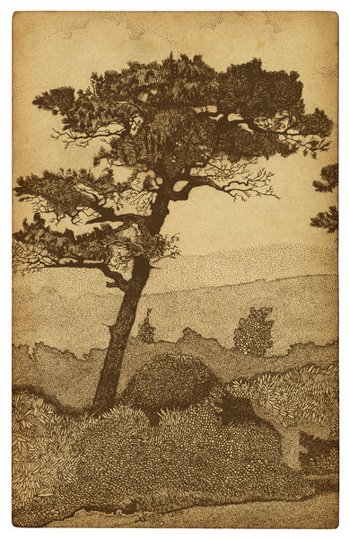Mountain Tree: A drawing from one of my vintage sketch books.