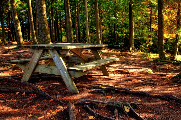 Forest Picnic Table - HDR: Forest picnic table in Mont Orford National Park, Quebec. HDR composite from multiple exposures.