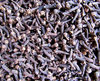 cloves in bulk2
