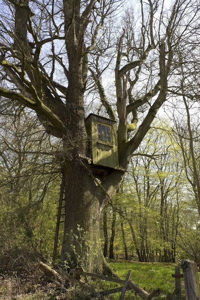 Treehouse: A deer hunter's treehouse in Sussex, England, in early spring.