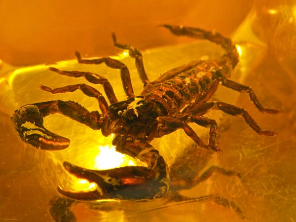 scorpion in bastard amber 2: scorpion in bastard amber 2