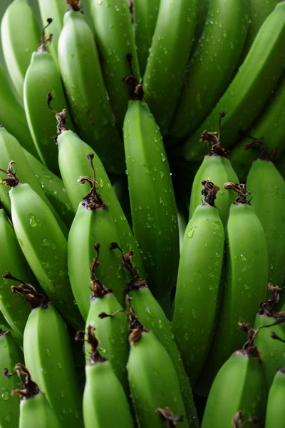 Green bananas: Green bananas with raindrops on the palm
