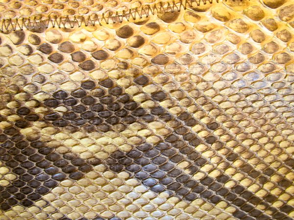 python skin: The Python belongs to the protected species.