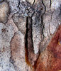 peeling bark textures10