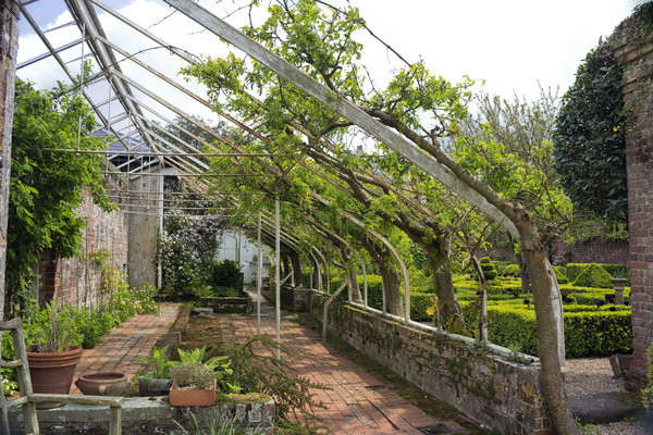 Garden trellis: A trellis to support trained laburnum trees in a garden in West Sussex, England.