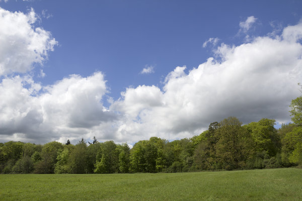 Field, forest and sky: Landscape in Buckinghamshire, England.