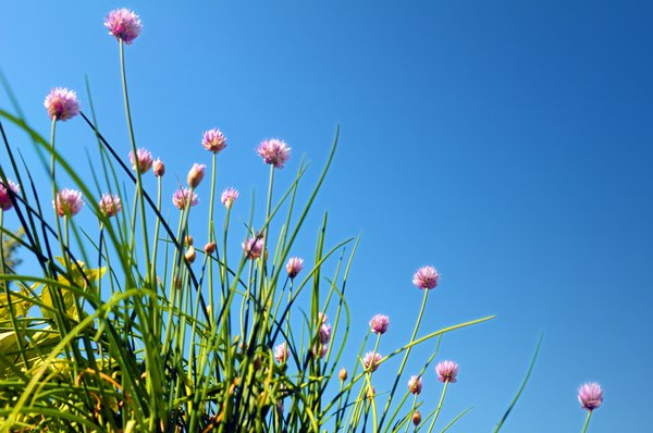 Stock photos rgbstock free stock images pink flowers mzacha black