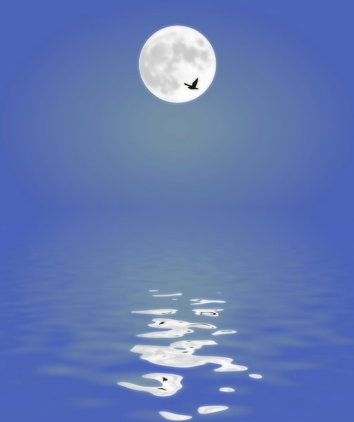 Moon Reflected in Water 1: A full moon reflected in the water. Bird flying past.