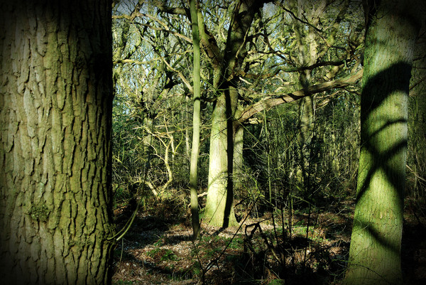 Forest in the Netherlands: Picture taken at