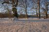 Winter in the oak forest