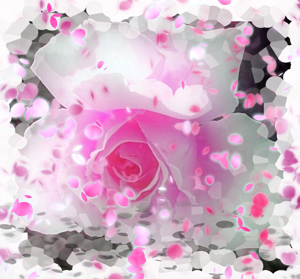 Spring Rose 2: A pink and white rose with a flurry of falling petals. A great illustration for Spring, gardening, love, creation - full of life and colour. You may prefer this: http://www.rgbstock.com/photo/mT62wC6/Springtime