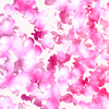 Falling Petals 1