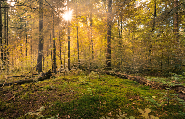 Fairytale Forest - Sunburst: Sunburst in natural Forest - Autumn