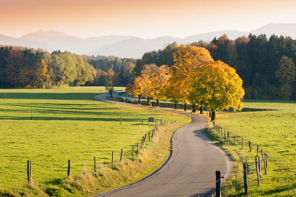 Winding Country Road through a: Winding Country Road through autumnal Landscape, vivid colored Maple Trees, Mountains in Background