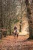Ride through Farytale Forest