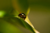 Dynamic Ladybug on Bamboo Leav