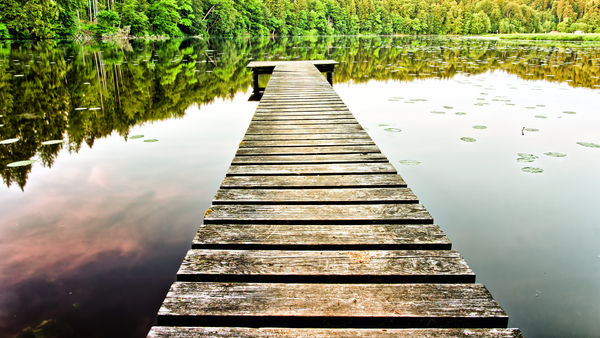Old Jetty: Old Jetty on a Lake, surrounded by deep Forest
