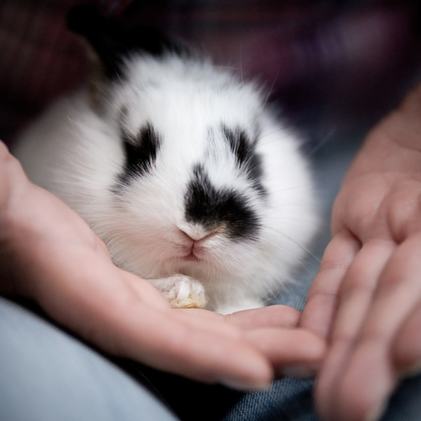 Baby Rabbit: Baby Rabbit on Hands