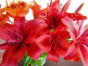 lily display2
