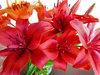 lily display2