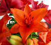 lily display4