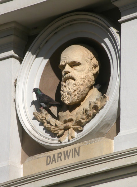 Darwin bust: A bust sculpture of Charles Darwin, one of several busts depicting the founders of modern science on the facade of the Natural Sciences Museum in La Plata, Argentina.