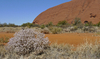 Uluru 1