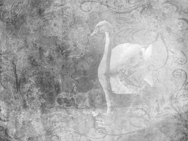 Fantasy Swan 2: A beautiful collage fantasy image of a swan in black and white with a grungy plaster effect.