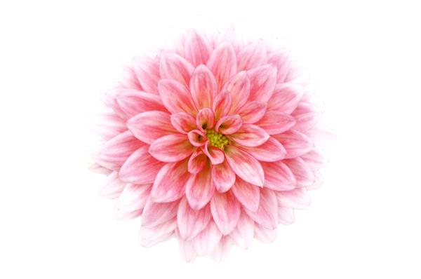 Free stock photos rgbstock free stock images flower jazza flower mightylinksfo