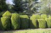 Topiary