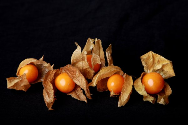 Five Physalis: Five Physalis on black