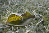 fallen leaf 3