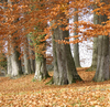 autumn forest 1