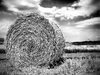 Round Haybale (B&W)