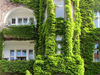 facade greening