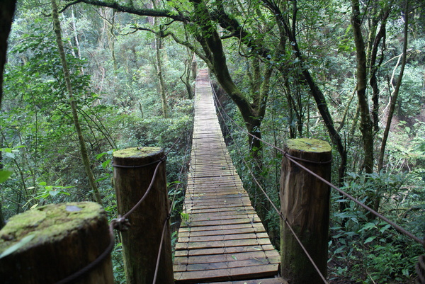 swing bridge: A fragile bridge in Montecristo forest in El Salvador.