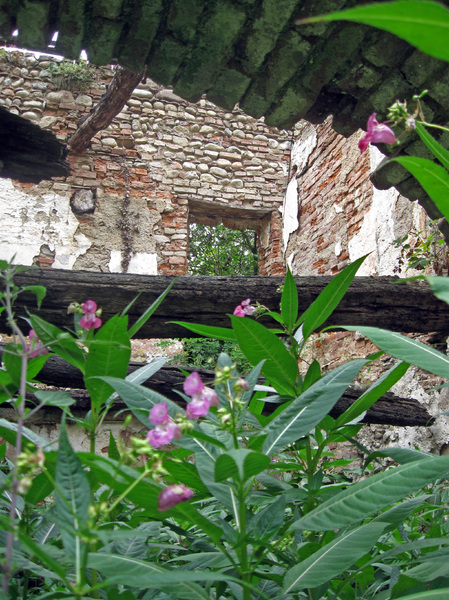 Gratis stock foto 39 s rgbstock gratis afbeeldingen ru nes met planten eveblackwood march - Blootgestelde balken ...