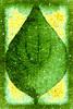 Leaf Texture 5