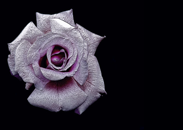Pink 3d Rose: A beautiful pink 3d textured rose on a black background.