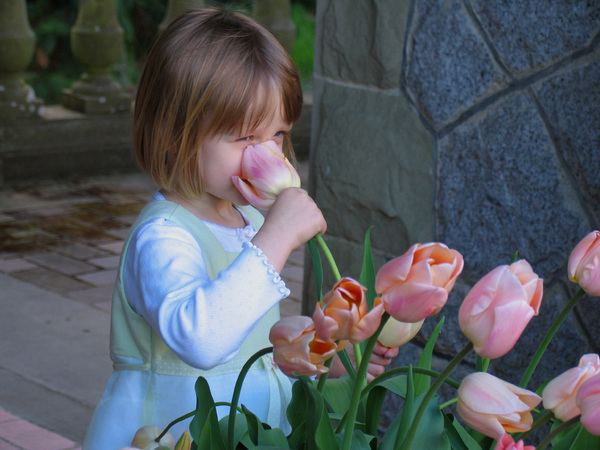 Tulip Girl: Young girl stopping to smell the ros....er.....tulips.