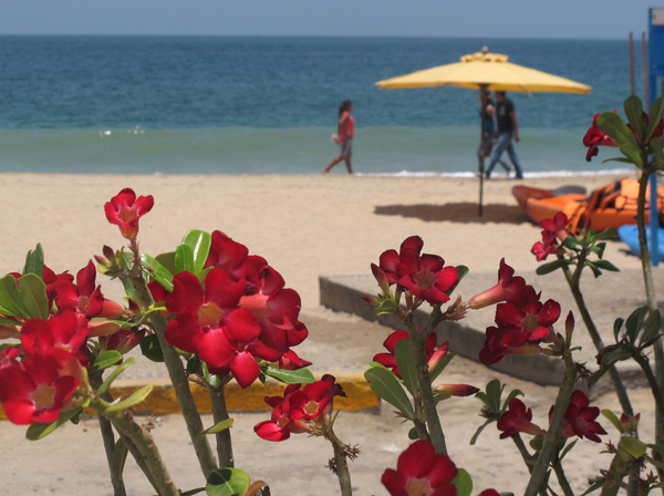 Red flowers at the beach: bright red flowers in the foreground, a Mexican beach and walking figures in the background.