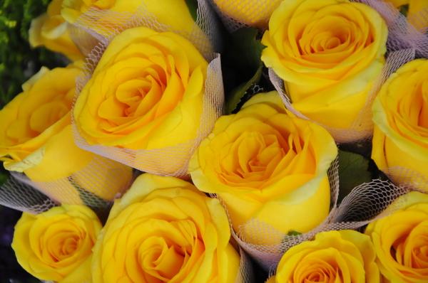 Free stock photos - Rgbstock - Free stock images | yellow ...  Beautiful