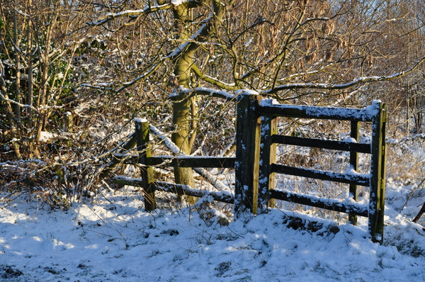 Winter gate: The gate to a country field in Yorkshire.