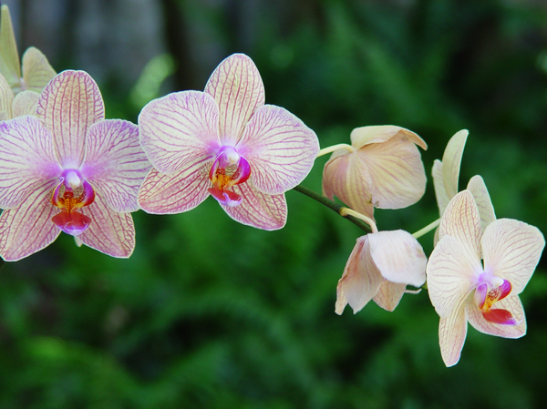 orchid 2: orchid