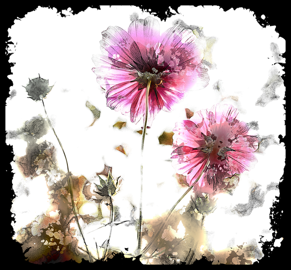 Grunge Flower 7: A grungy impressionistic painted flower with a black border and made from a public domain image. You may prefer:  http://www.rgbstock.com/photo/o3BdbJi/Fairy+Iris+Border+11  or:  http://www.rgbstock.com/photo/nHP0muC/Rainbow+Dandelion
