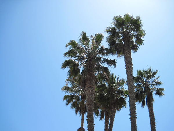 Palms: Palms in the sun