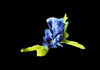 Blue Flower on black